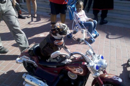 cosplay pup on remote controlled bike