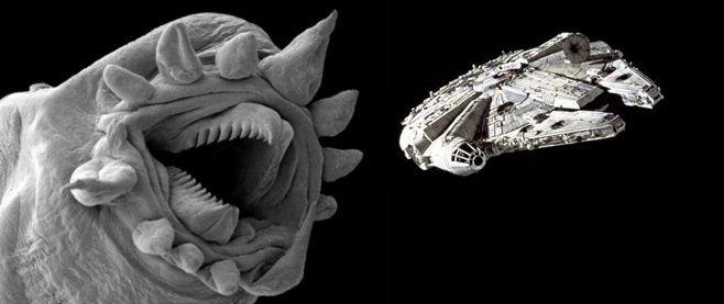 Hydrothermic Worm vs. Millennium Falcon