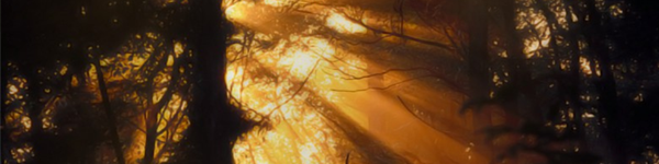 A forest lit in the golden hour. This is a still from the game Notch the Innocent Luna