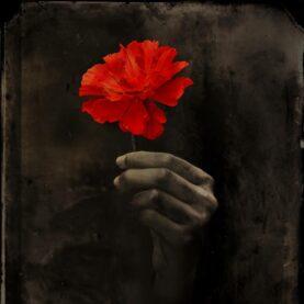 A hand grasps a red flower.