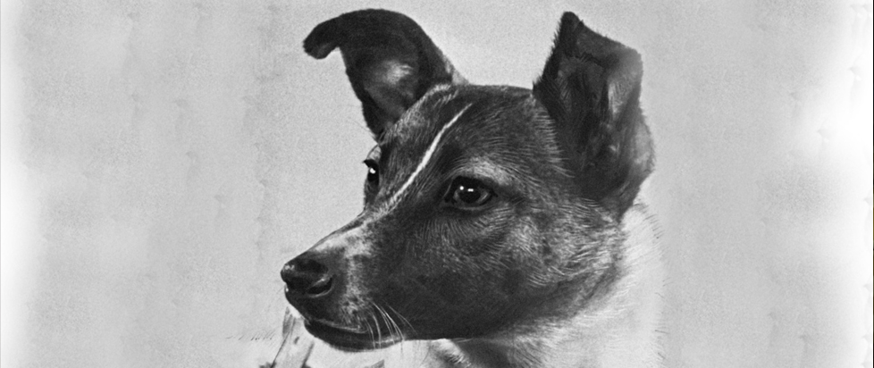 Laika, a Soviet space dog the first animal to ever orbit the Earth.