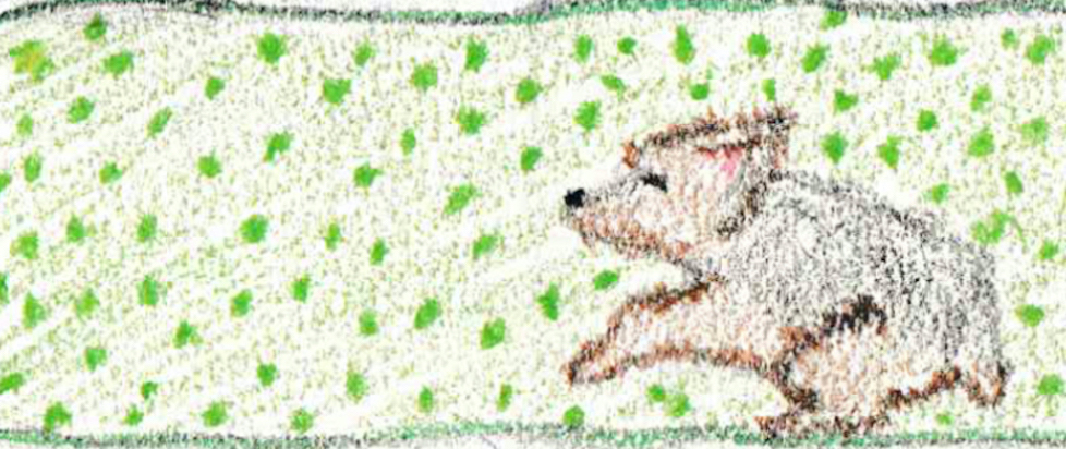 A dog on a green blanket.